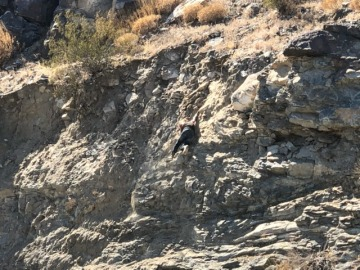 Woman Slides Down Mountain in Cathedral City