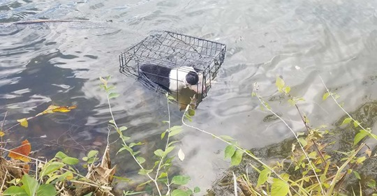 Man rescues dog trapped in cage in Illinois lake