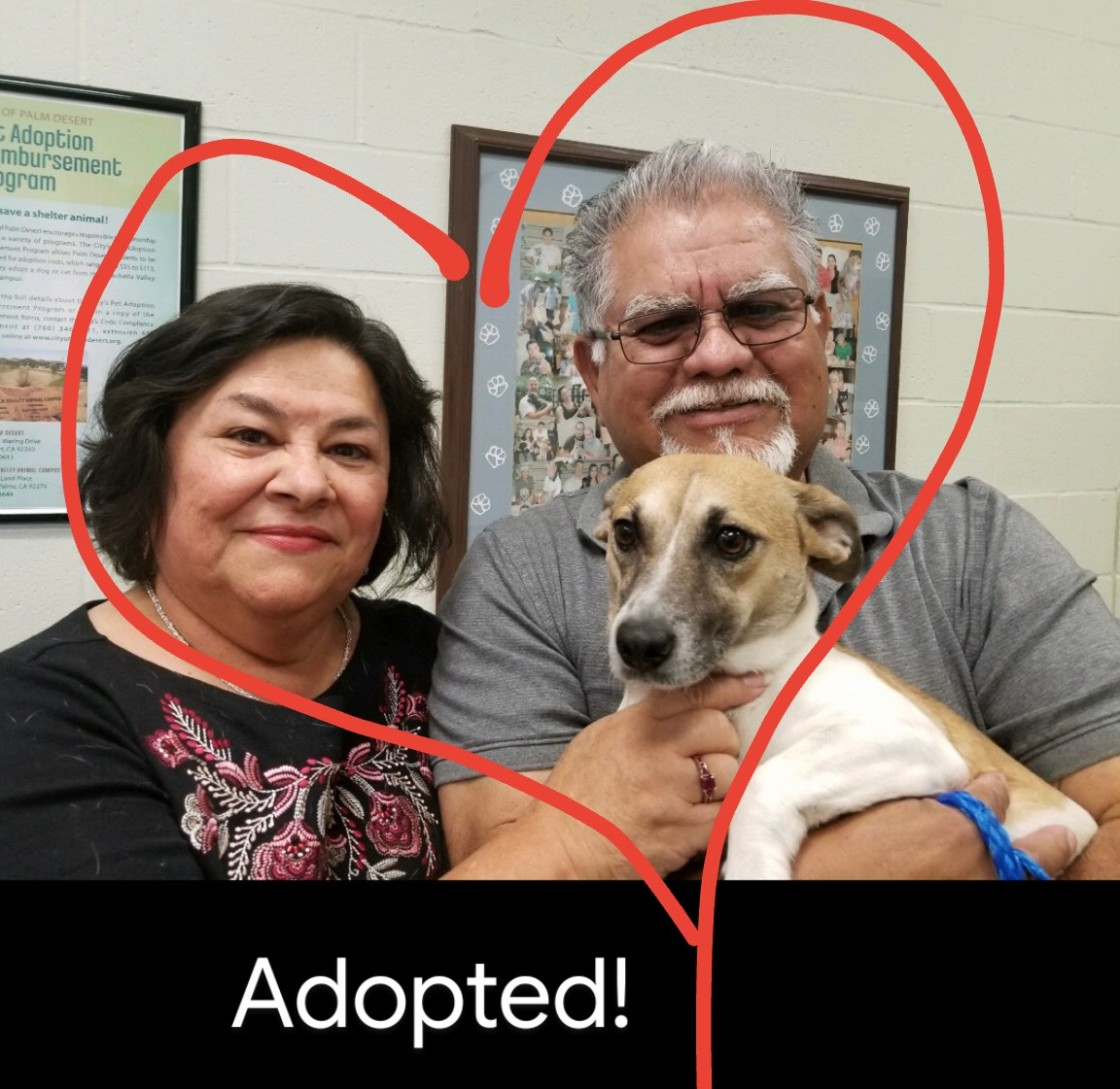 Special Family Finds Perfect Match at County's Free Pet Adoption Event