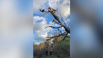 Firefighters rescue dog that got stuck in tree while chasing cat