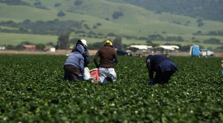 New proposal offers fast-track to citizenship for farm workers, protects DACA recipients