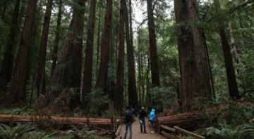Hiker killed in Muir Woods National Monument after a redwood tree collapsed