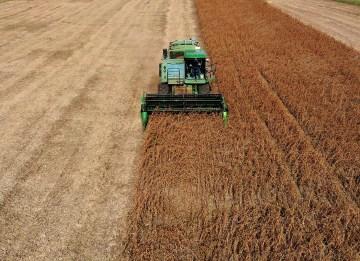 US farm bankruptcies jump 20% in 2019 despite Trump bailout
