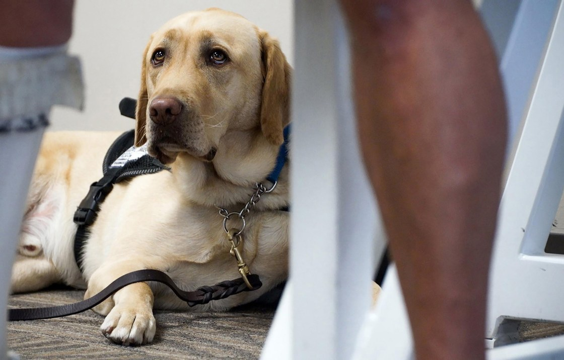 Vet Shortage Made Worse by Pandemic