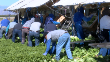 Field Workers still Harvesting as Pandemic Spreads