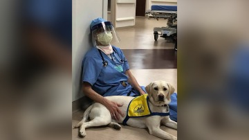 A service dog in training brings comfort to ER doctors on the frontlines