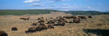 Yellowstone and Grand Teton among the national parks closing immediately