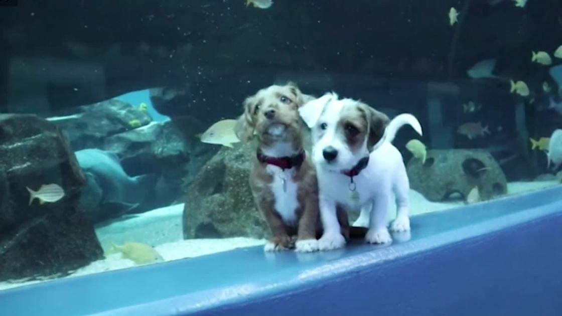 These puppies got to frolic in a huge aquarium. The fish didn't seem to care