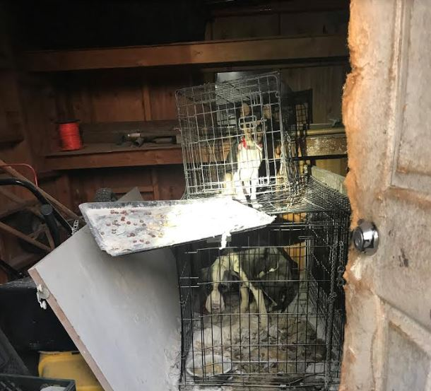 Two Dogs Found Caged in Storage Unit Without Food or Water