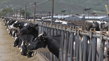 USDA Announcement Expected to Help Dairy Farmers