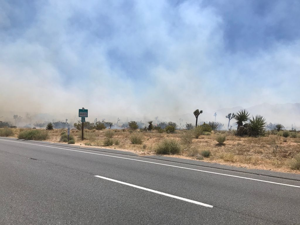 Arrest Made Following 150 Acre Vegetation Fire in Joshua Tree