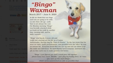 Therapy Dog Mauled to Death; Other Dog Back in Owners Possession