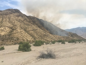 Crews Work to Contain Vegetation Fire in Palm Springs