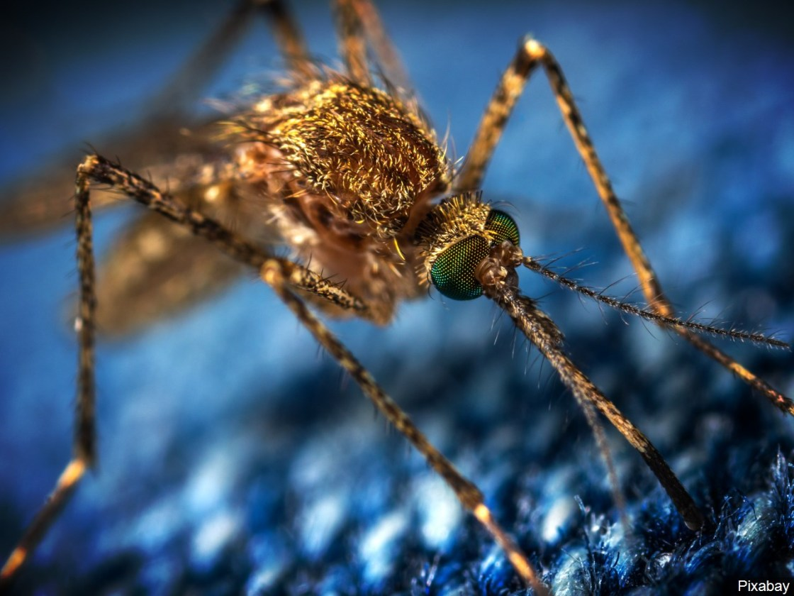 West Nile Discovered in Palm Desert