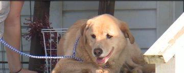 Dog somehow makes 57-mile journey to her old home in Lawson
