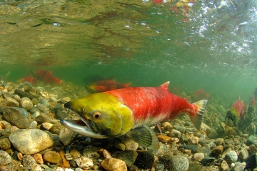 Warming temperatures threaten hundreds of fish species