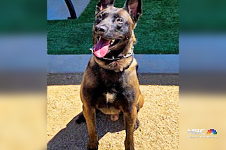 DHSPD K-9, Storm, receives donation of body armor