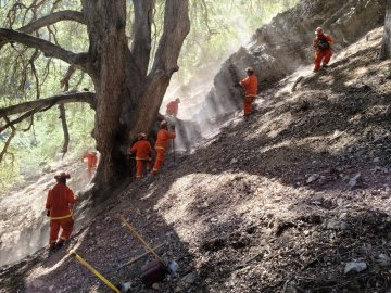 Inmate Fire Crew Saves Largest Oak Tree in North America