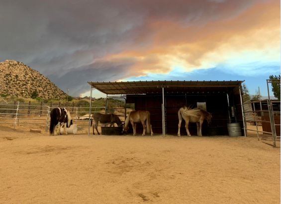 Pioneertown residents worry about livestock with Apple Fire approaching