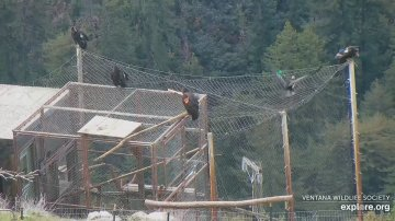 Sanctuary for endangered condors burns in California wildfire