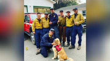 Meet Kerith, the 2-year-old golden retriever who comforts firefighters in California