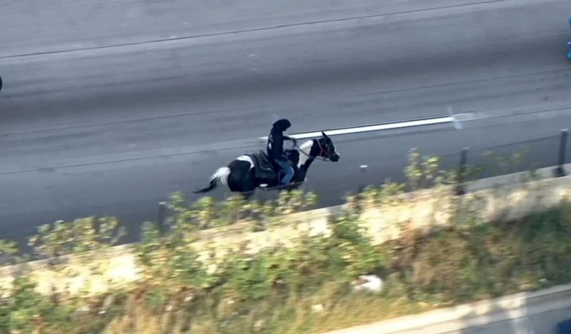 Man arrested for riding his horse on a Chicago highway