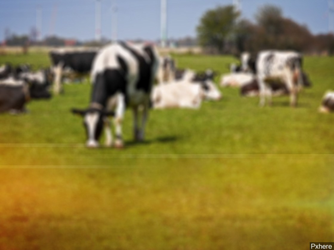 Cow Abuse Lawsuit Against San Jacinto Family Based on Fiction, Lawyers Says