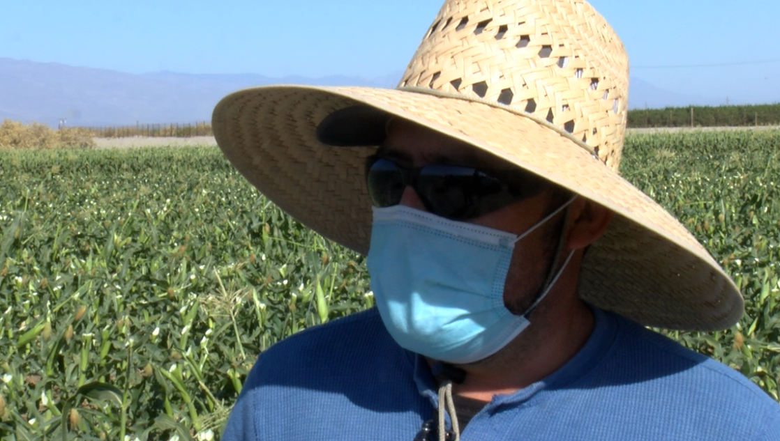 Remembering our farmworkers during Thanksgiving