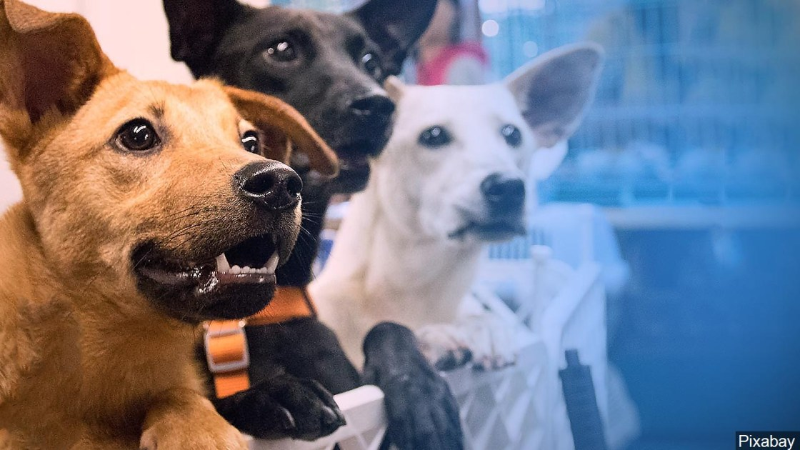 Supervisors Expected to OK Changes to County's `Dangerous Dogs' Ordinance