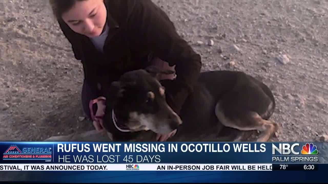 Family dog went missing in Ocotillo Wells for 45 days