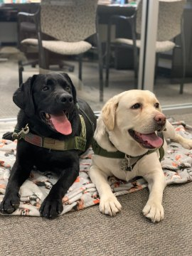 Rejected Guide Dogs Find New Purpose Helping First Responders