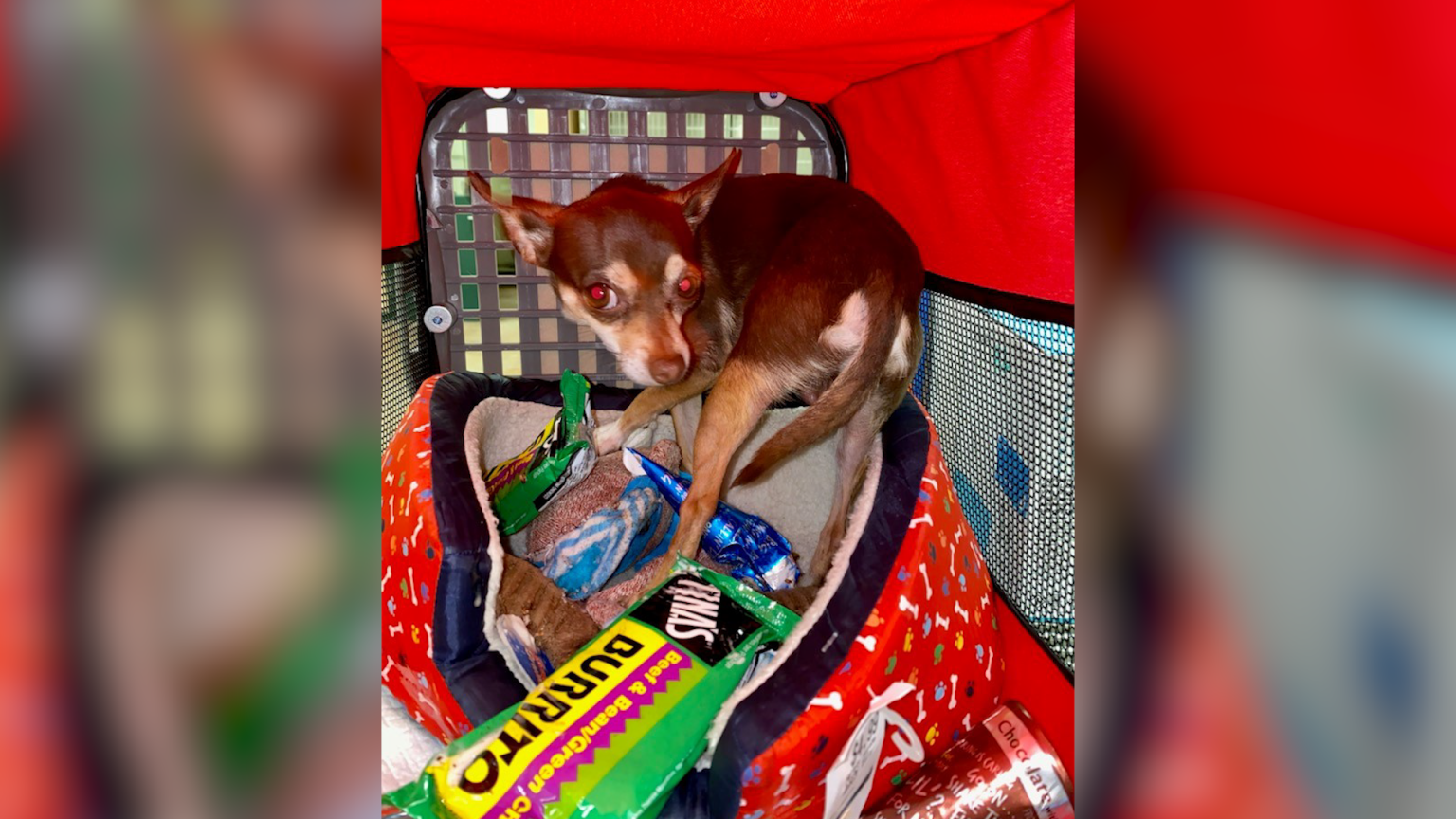 Dog left in hot car outside Living Desert with frozen burritos and ice cream