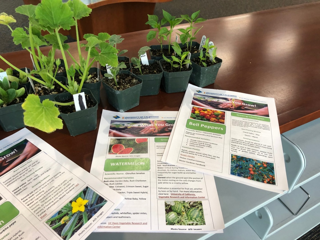 La Quinta Library Earth Day plant giveaway
