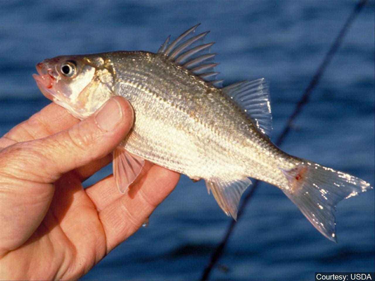 Fishing tournament benefiting veterans set for Saturday in La Quinta