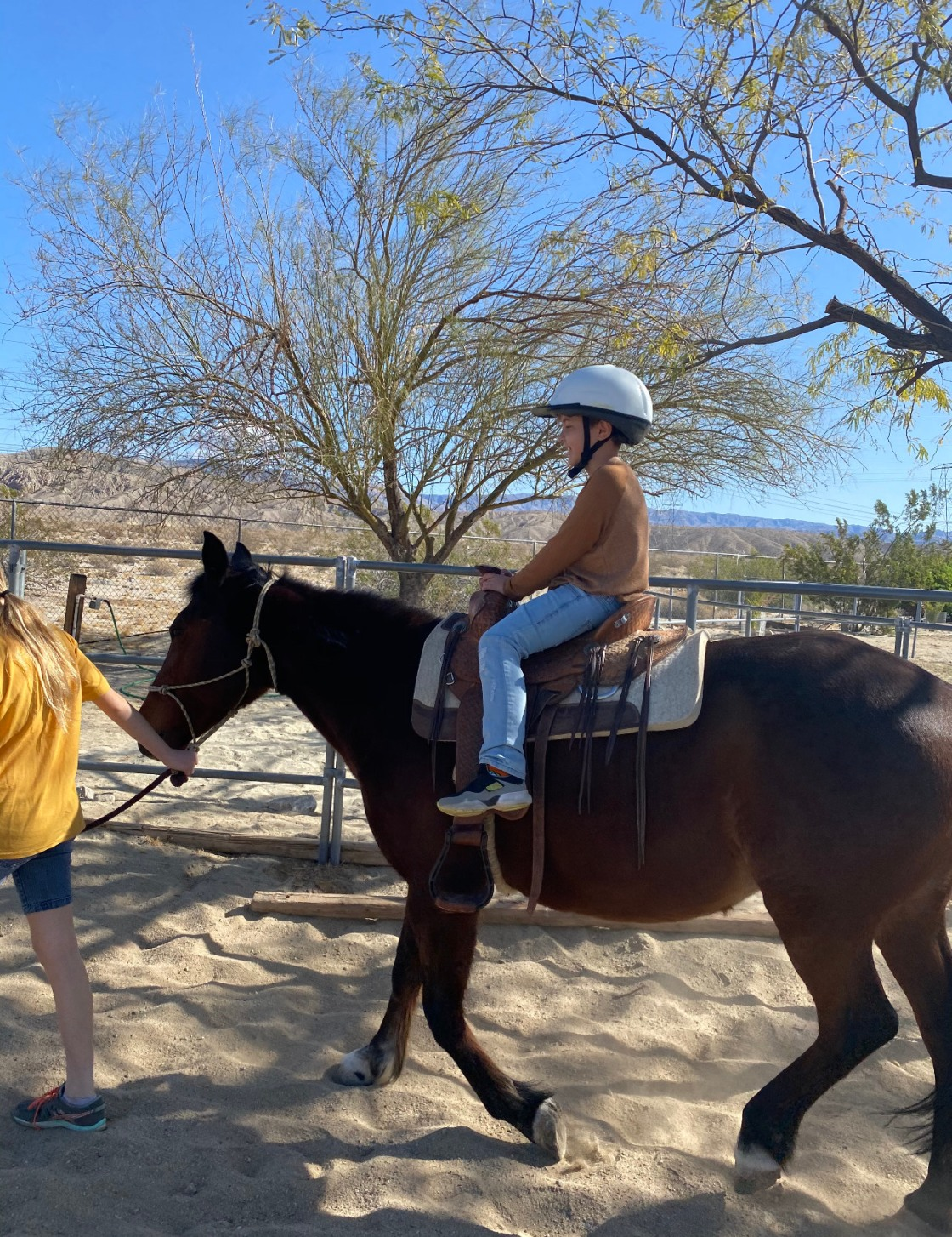 Non Profit Helping Children Through Horse Therapy Needs Forever Home