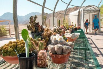 Living Desert Zoo and Gardens opens `Plant Rescue Center'