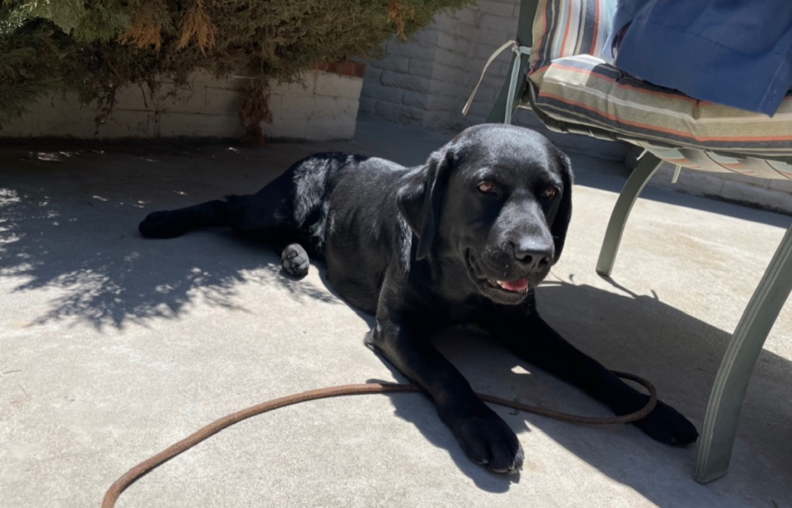 Riverside County Support Dog Lila Training to Help Capitol Police Officers