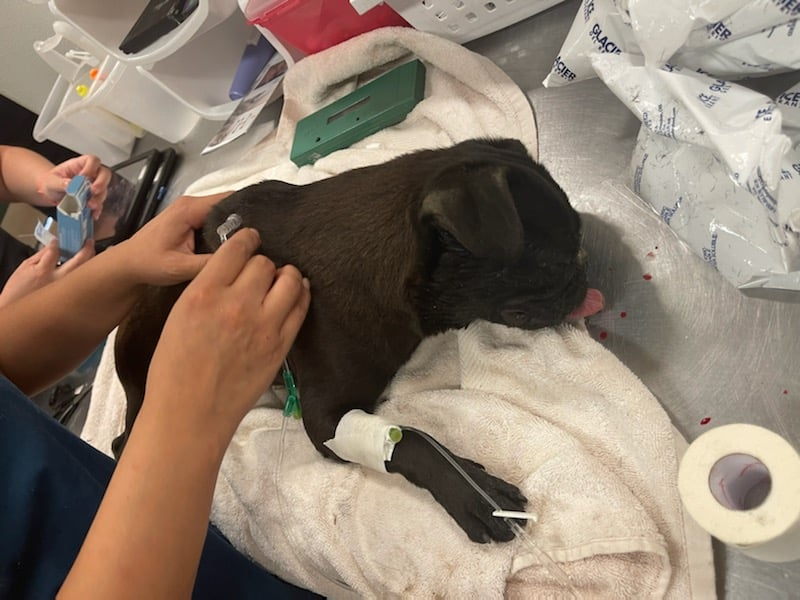 County Animal Services Urging Pet Owners to Bring Pet Indoors After Dog Dies of Heat Exhaustion