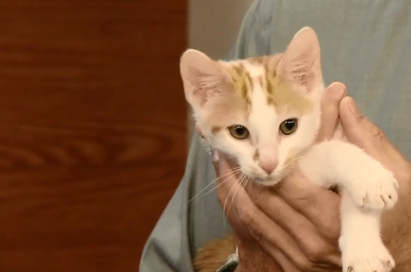 WATCH: Alex the Kitten at Animal Samaritans is Looking for the Purrrfect Home
