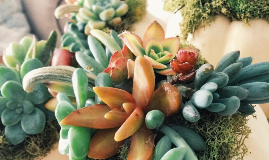 WATCH: Why Aren't My Succulents Thriving? Riverside Co. Master Gardeners Have Some Answers