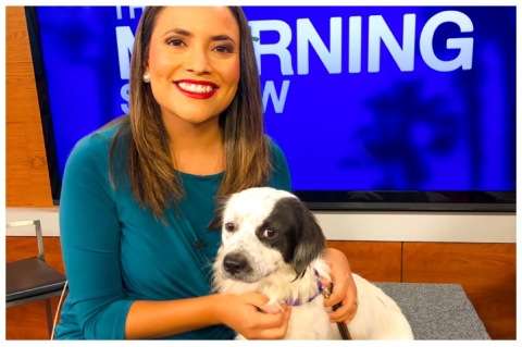 Adopt Don't Shop: Saturday is Clear the Shelters Day at Palm Springs Animal Shelter